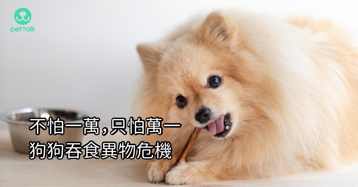 不怕一萬,只怕萬一!狗狗吞食異物危機