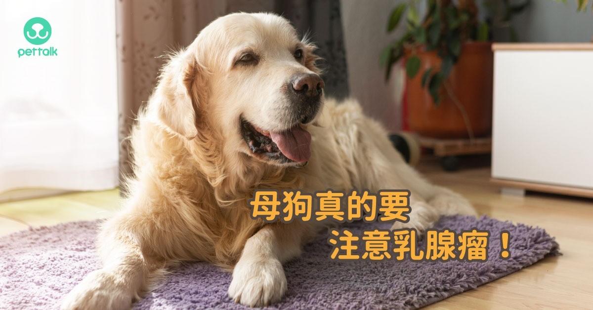 母狗真的要注意乳腺瘤!