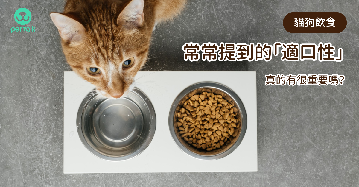 貓狗飲食常常提到的「適口性」,真的有很重要嗎? 專業獸醫—宋子揚