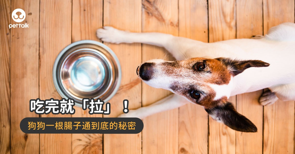 「一根腸子通到底」為什麼狗狗可以吃完就馬上拉?|專業獸醫—王文秀