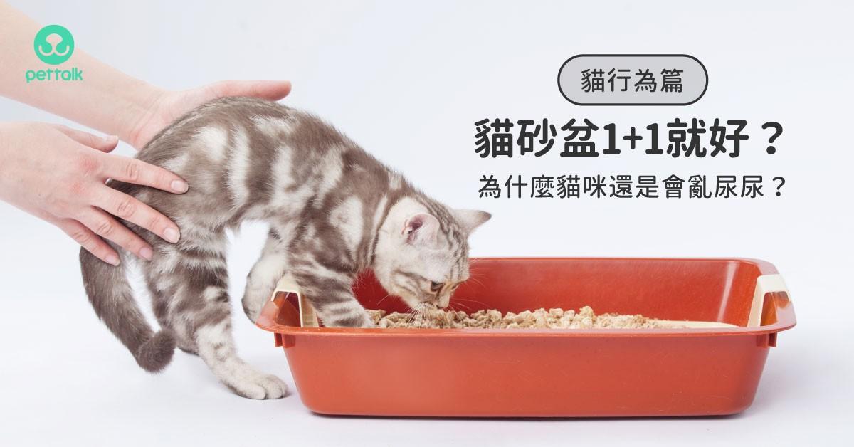 你以為只要做到「貓砂盆數量是貓咪數+1」就好了嗎?|貓行為獸醫—林子軒