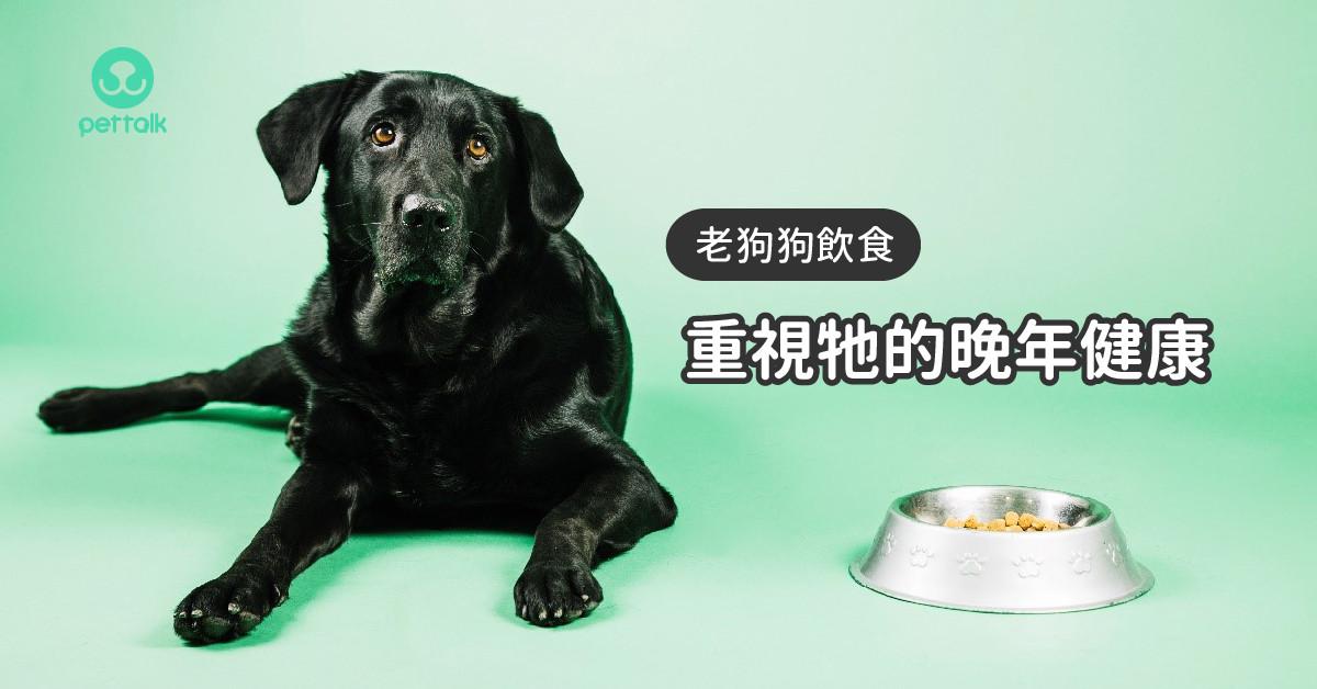 重視牠的晚年健康—老狗狗飲食篇|專業獸醫—温琮斐