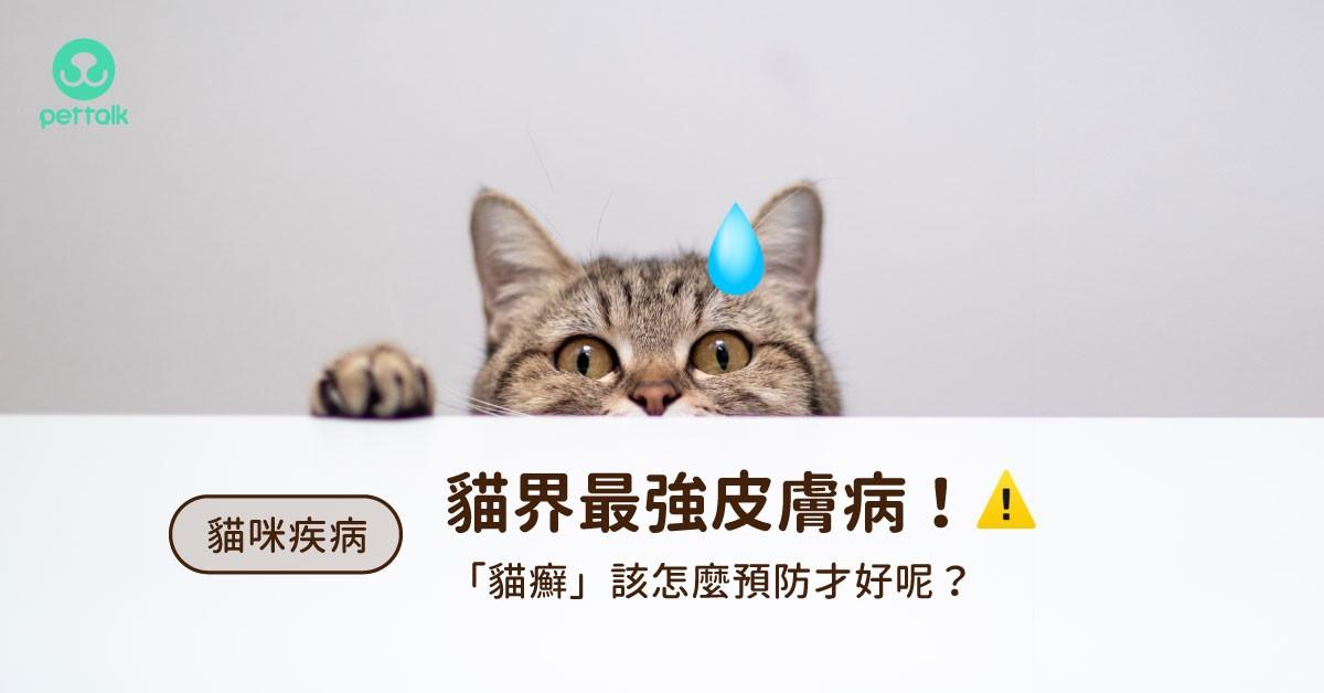 人貓都會得的貓咪皮膚病!想讓「貓癬」徹底消失該怎麼做?(上集–預防篇)|專業獸醫—施懿軒