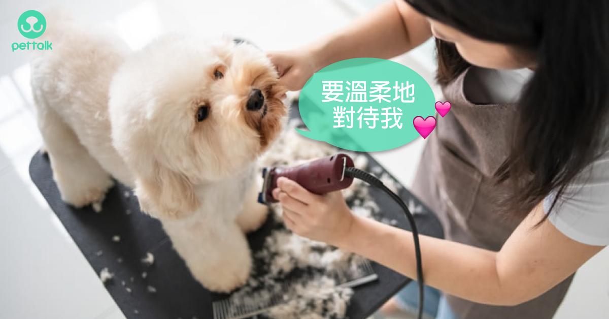 如何選擇寵物美容店?|寵物美容老師—林文琳