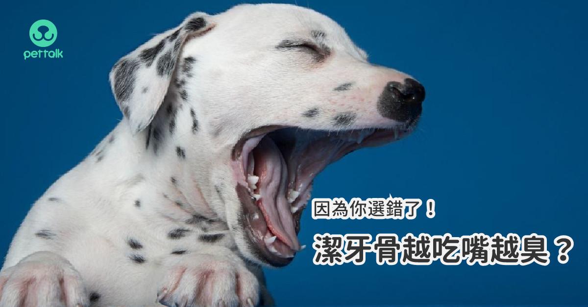 為什麼狗狗越吃潔牙骨嘴越臭?因為你選錯了!|專業獸醫—楊孝柏