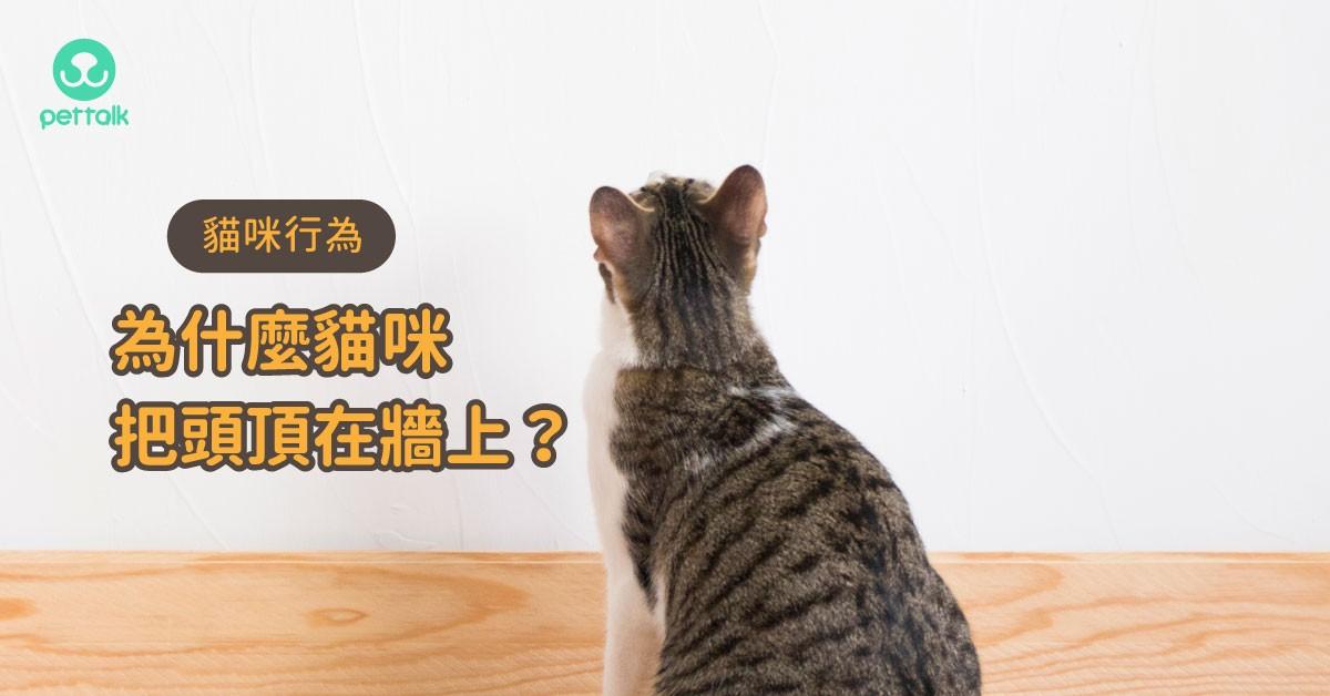 為什麼貓咪會把頭頂在牆上?|貓行為獸醫—林子軒