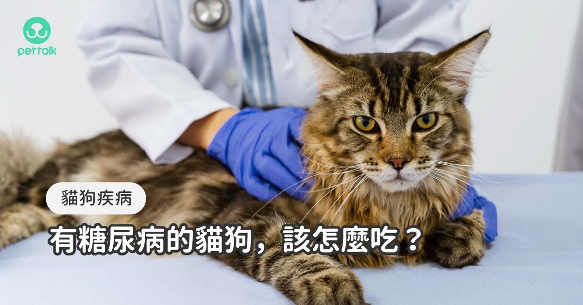 淺談貓狗糖尿病的臨床治療與飲食重點|專業獸醫—宋子揚