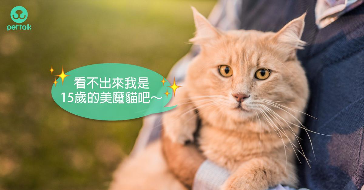 進入熟齡期的貓,該預防哪些常見疾病?|專業獸醫—林源盛