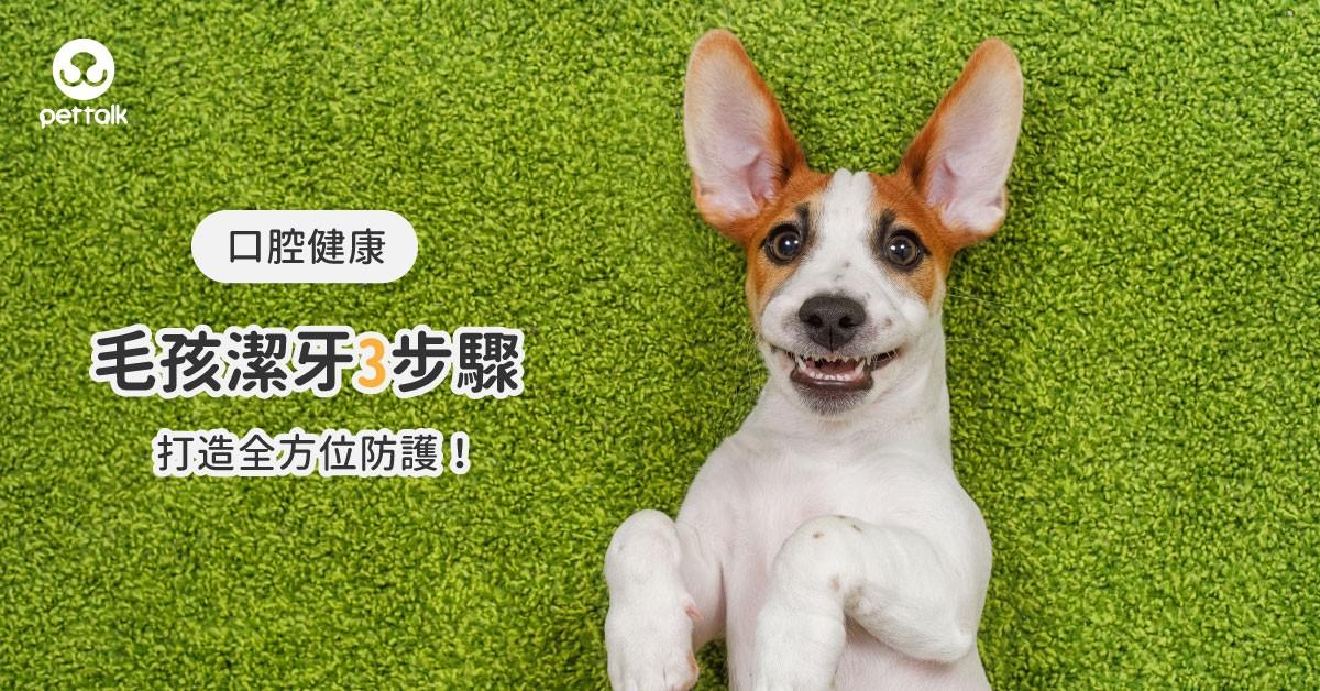 【毛爸媽必看】毛孩潔牙3步驟,打造全方位防護!|專業獸醫—潘建宏