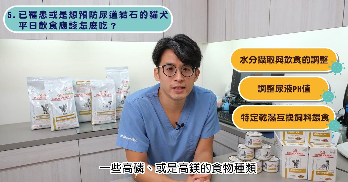 【PetTalk專訪】尿道裡的小石頭,毛孩泌尿道結石手術 專業獸醫—宋子揚