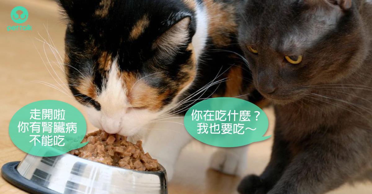 當貓咪有腎臟病時:關於低磷飲食|營養獸醫師—王恬中Tammie