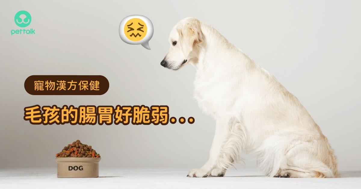 【寵物漢方保健】炎炎夏日,毛孩的「玻璃腸胃」該如何呵護?|專業獸醫—姜家麟