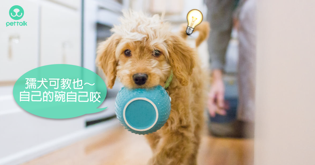狗狗的教育不能等!掌握最佳學習黃金期|PetTalk愛寵健康談