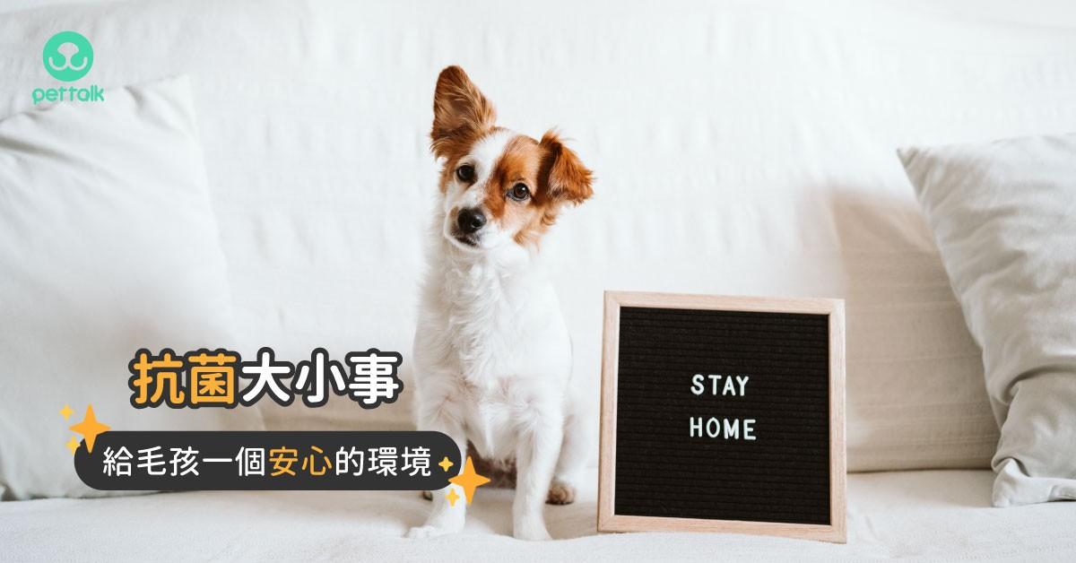 【抗菌大小事】給毛孩一個安心又安全的居家環境|專業獸醫—王小玲