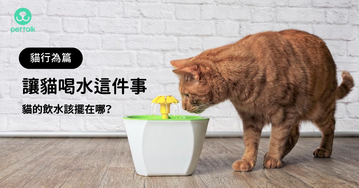 讓貓喝水這件事,貓的飲水該擺在哪?|貓行為獸醫—林子軒