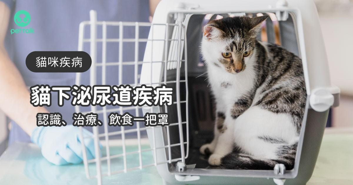 貓下泌尿道疾病:認識、治療到飲食照護一把罩|專業醫師—楊孝柏