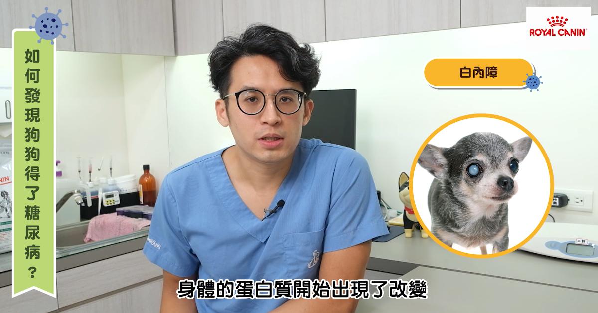 【PetTalk專訪】「能吃就是福?」胖胖狗更容易得糖尿病,你不知道嗎! 專業獸醫—宋子揚
