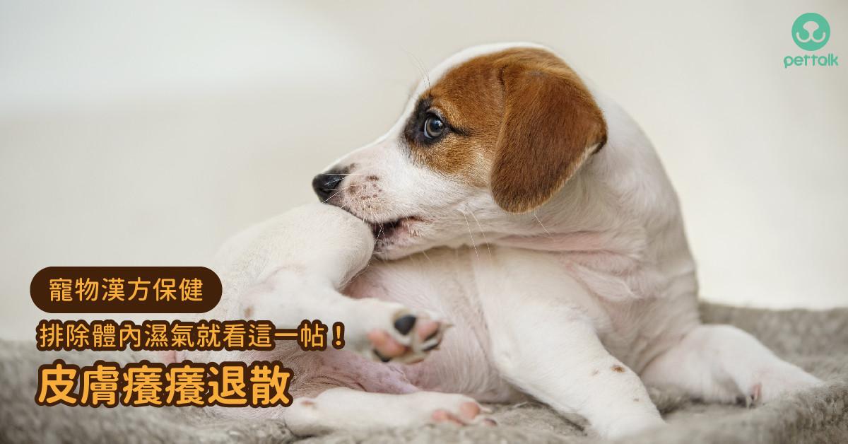 【寵物漢方保健】排除體內濕氣,讓毛孩皮膚從此「癢癢退散」|專業獸醫—姜家麟