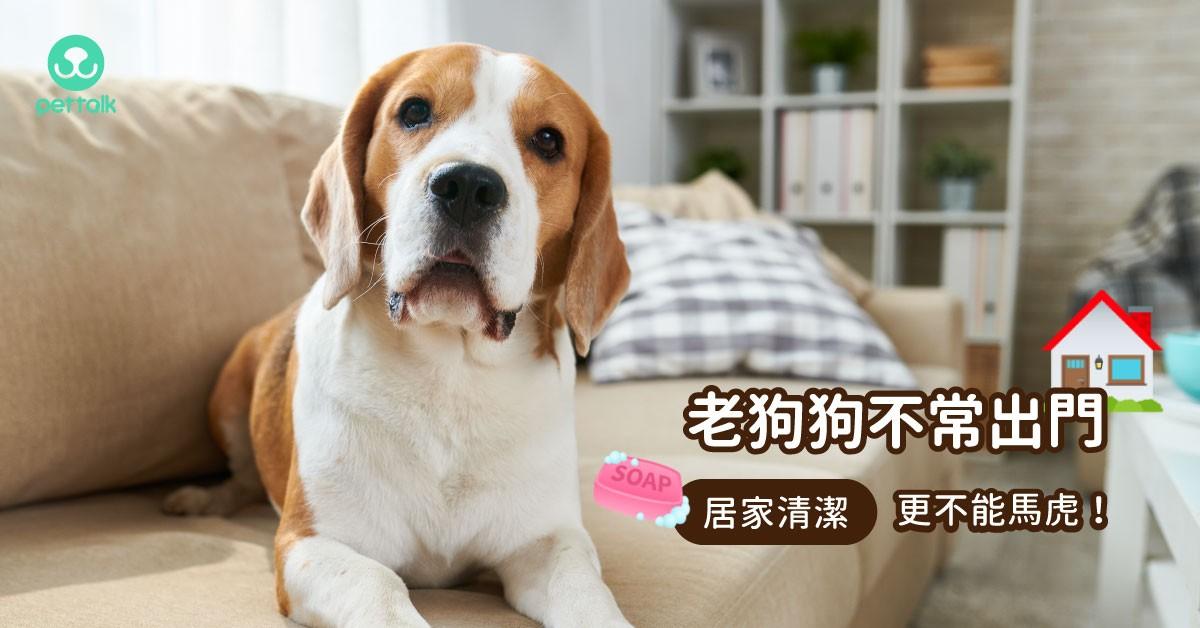 不出門的狗狗,更要做好居家清潔!|專業獸醫—李柏儒