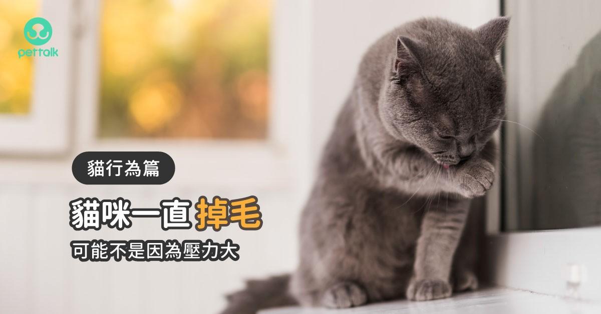 走過必留下「毛」跡?貓咪掉毛可能不是壓力山大|PetTalk愛寵健康談