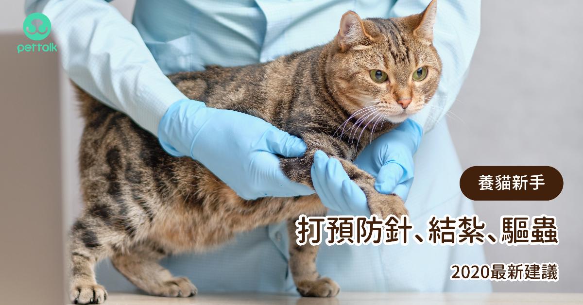 養貓新手必備知識:打預防針、結紮、驅蟲,2020最新建議|專業獸醫—劉子華