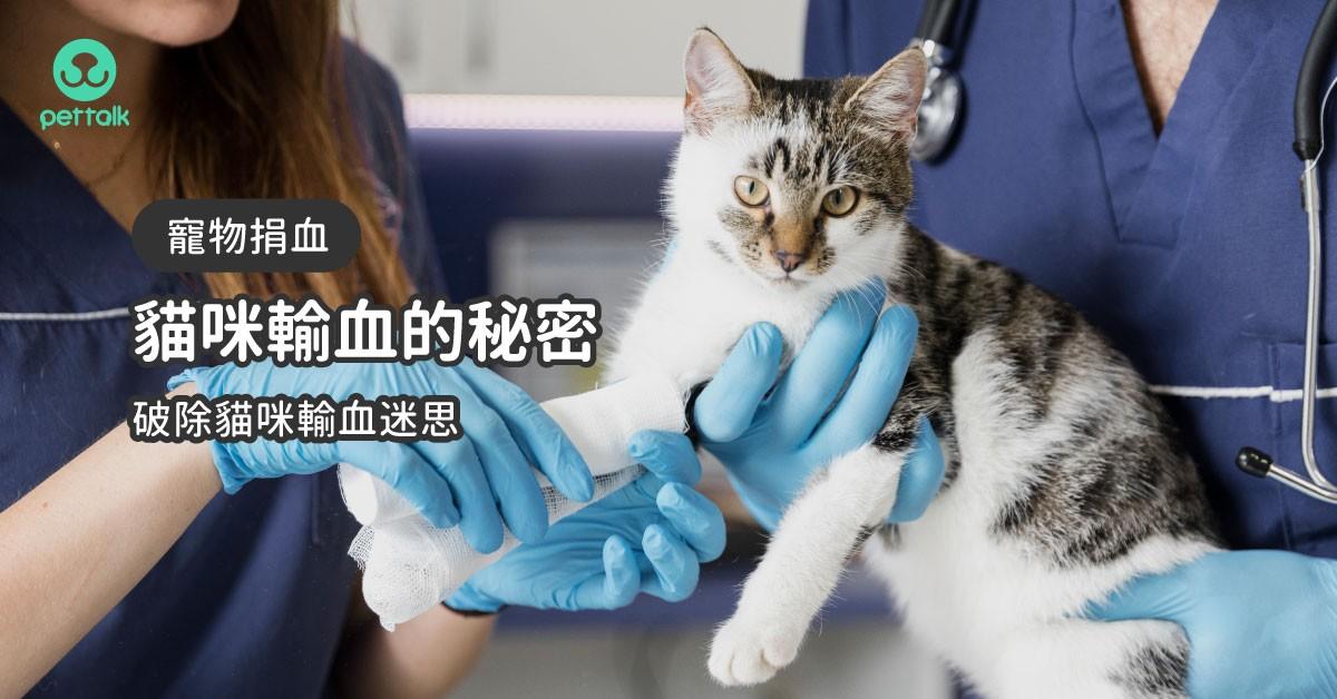 貓咪輸血很難配嗎?一次看懂貓咪輸血小秘密|專業獸醫—柯亞彤