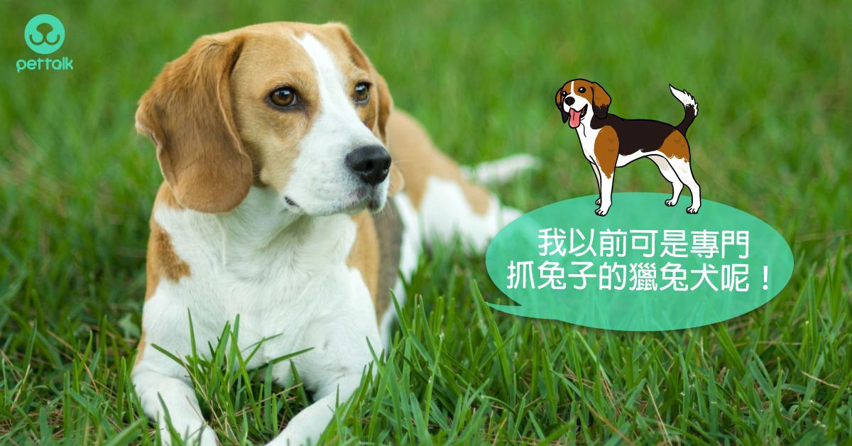 飼養前請先認識我:中型犬介紹(上集)|專業獸醫—楊靜宇