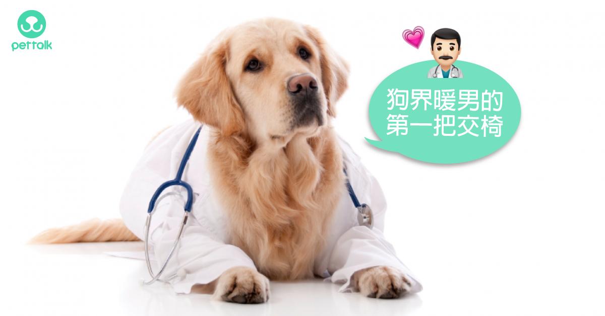 工作犬特輯:狗醫生的工作經