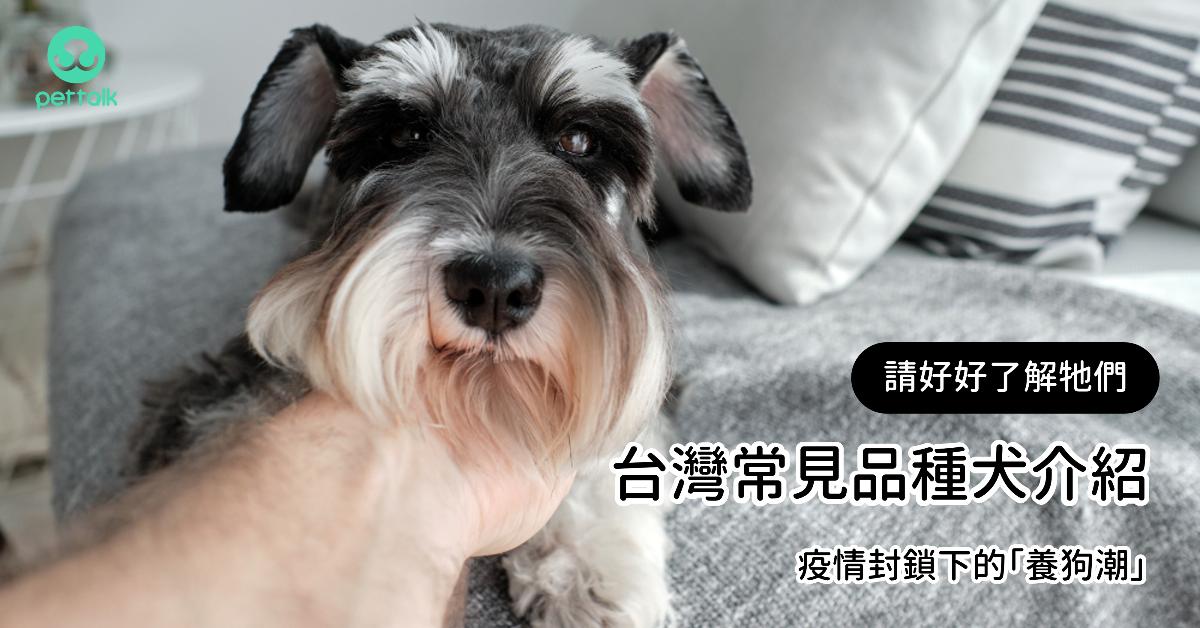 疫情封鎖下的「養狗潮」:請好好了解牠們—台灣常見品種犬介紹|專業獸醫—宋子揚