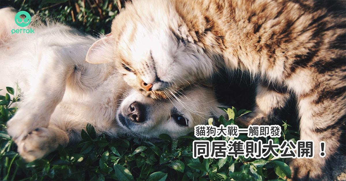 貓狗大戰一觸即發,同居準則大公開!|專業獸醫—李道絨
