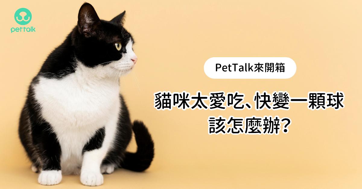 【PetTalk來開箱】貓咪太愛吃、快變一顆球,該怎麼辦?|專業獸醫—楊孝柏