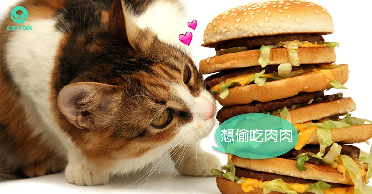 貓也會得糖尿病嗎?|專業獸醫—翁敏捷