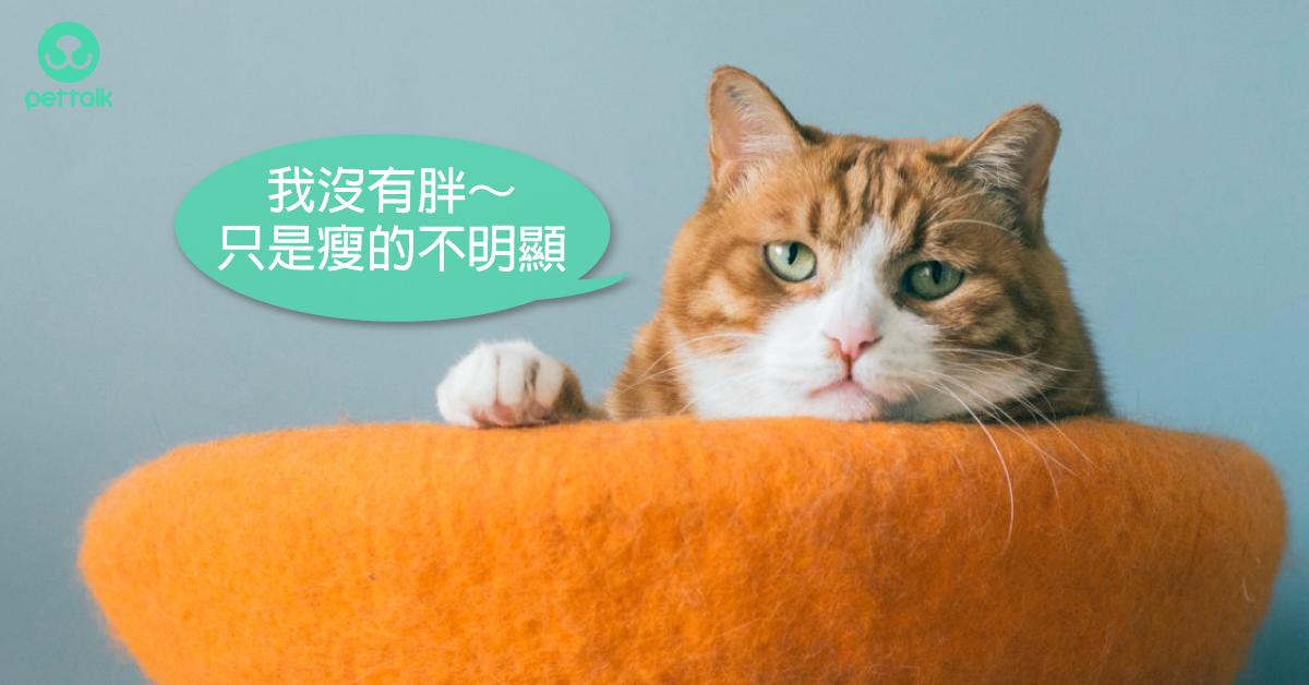如何照顧糖尿病患貓?|專業獸醫—翁敏捷
