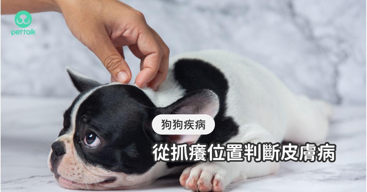 狗狗東抓西抓是怎麼了?從抓癢位置來判斷可能得了哪種皮膚病|專業獸醫—柯亞彤