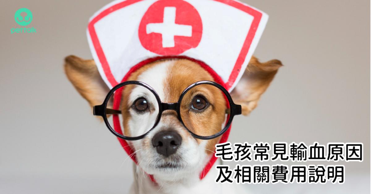 毛孩常見輸血原因及相關費用說明|PetTalk愛寵健康談