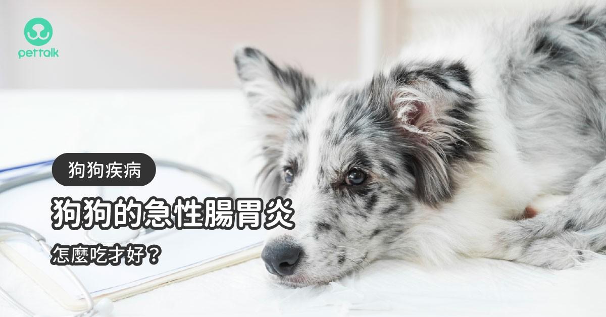 狗狗急性腸胃炎時期的飲食照護守則|專業獸醫—宋子揚
