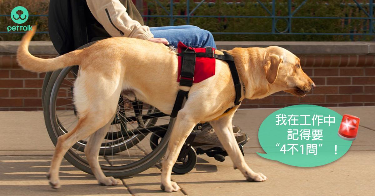 工作犬特輯:導盲犬的工作經