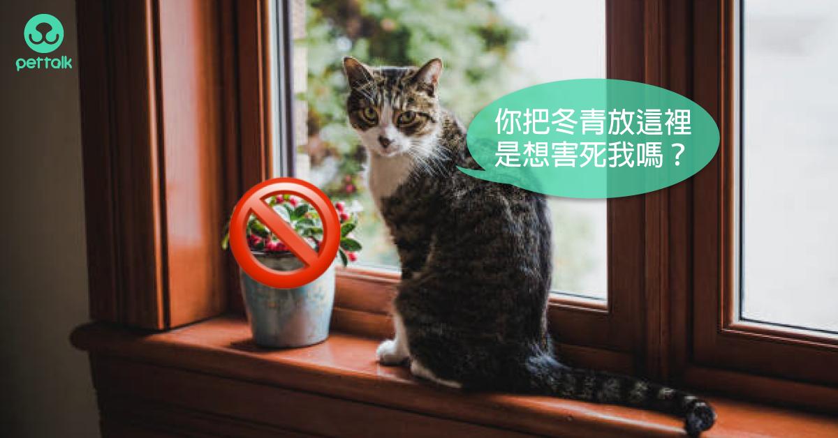 聖誕植物好有情調~但小心貓狗誤食!|PetTalk愛寵健康談