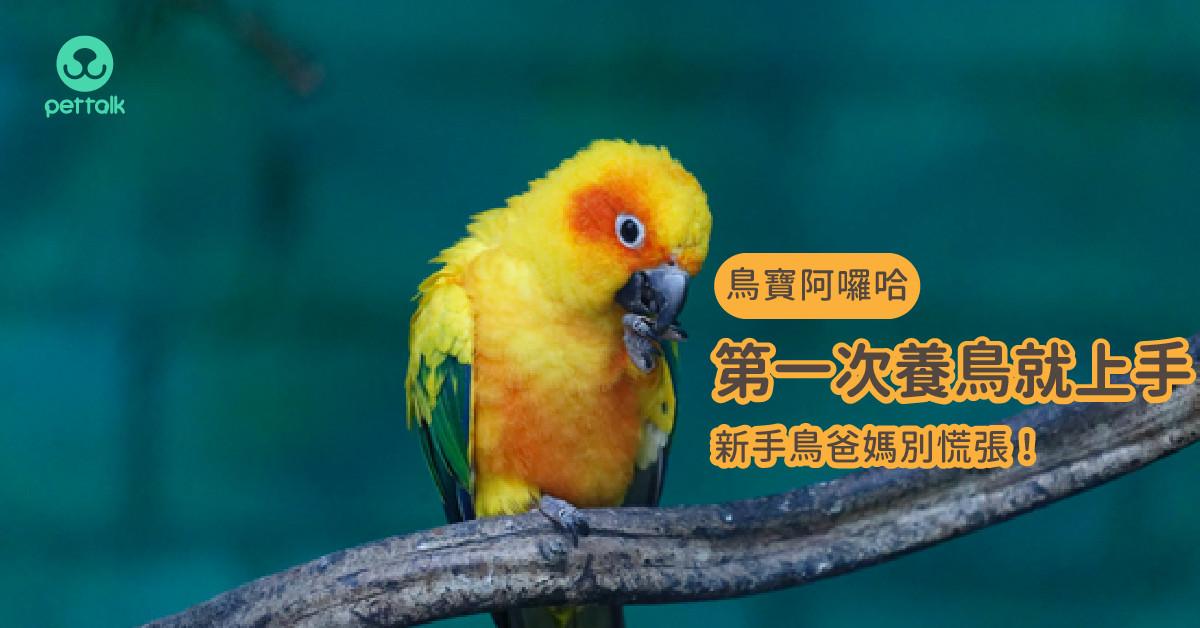 【鳥寶阿囉哈】第一次養鳥就上手,新手鳥爸媽別慌張!(上)|專業獸醫—林依儒