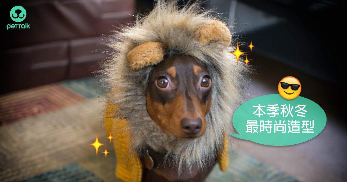 狗狗的新衣?毛孩的穿衣重點|PetTalk愛寵健康談
