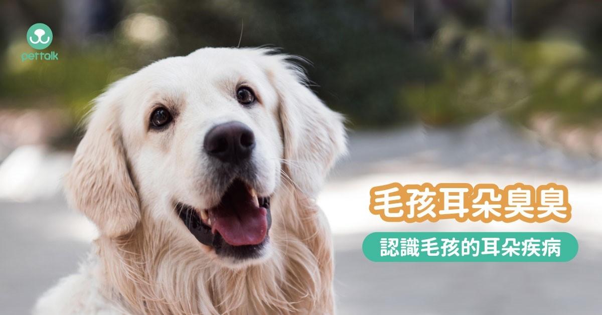 吿別臭臭耳,毛爸毛媽可以這樣做!|專業獸醫—楊孝柏