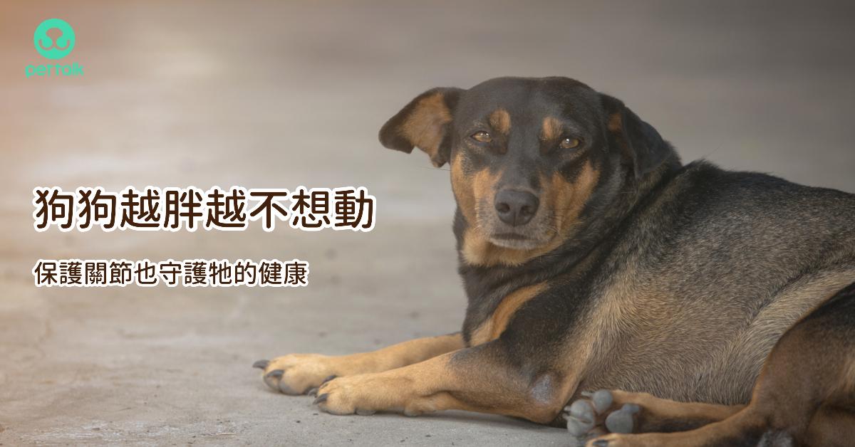 狗狗越胖越不想動,保護關節也守護牠的健康 專業獸醫—宋子揚
