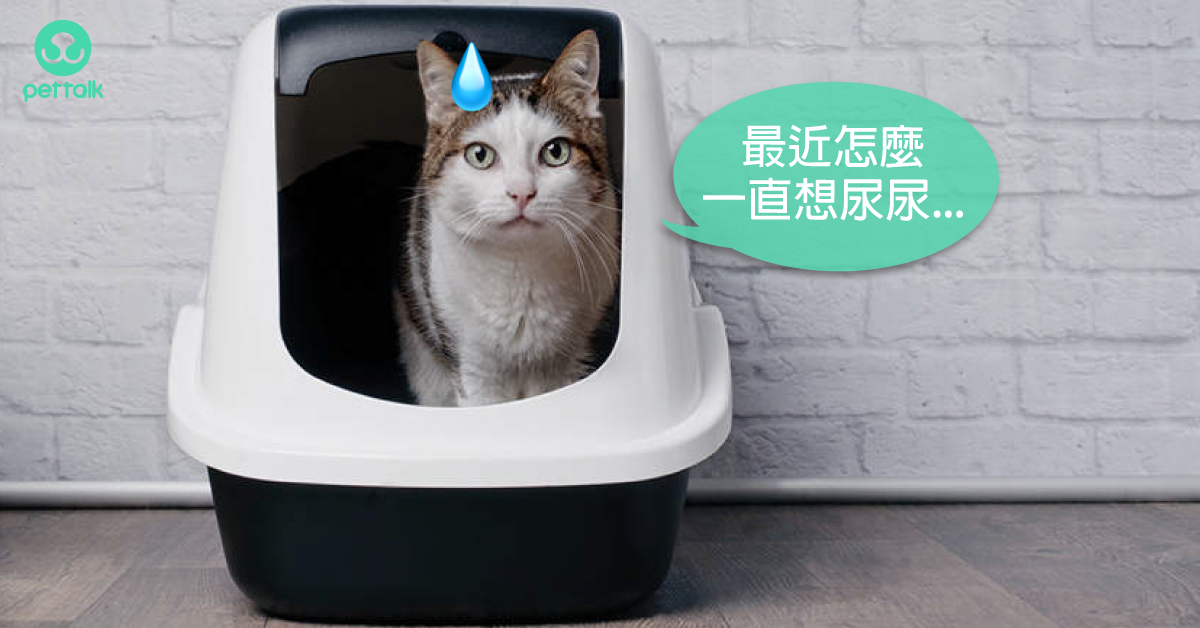 不是糖尿病?貓咪出現「三多」也可能是這個疾病!|專業獸醫—林源盛