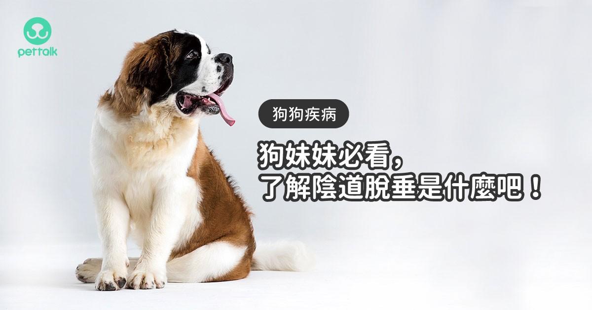 沒結紮的狗妹妹看過來,小心陰道脫垂這毛病唷!|專業獸醫—姚勝隆