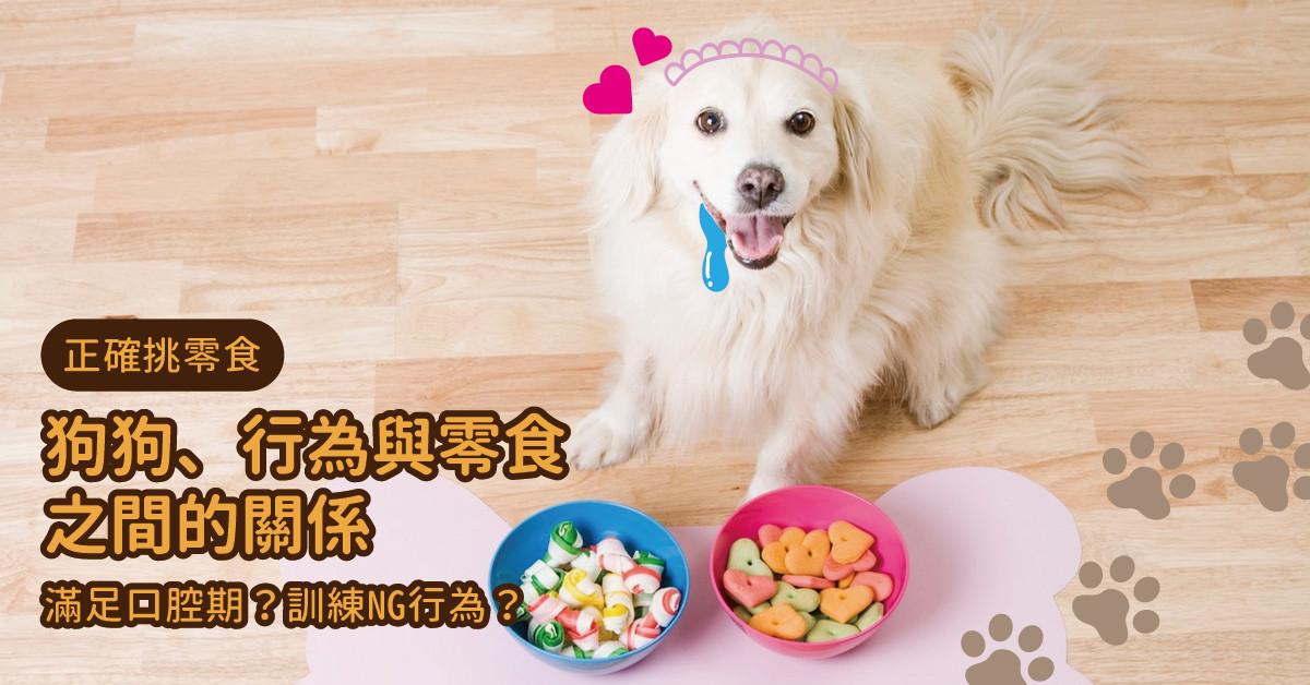 狗狗、行為與零食之間的關係|專業獸醫—姚勝隆