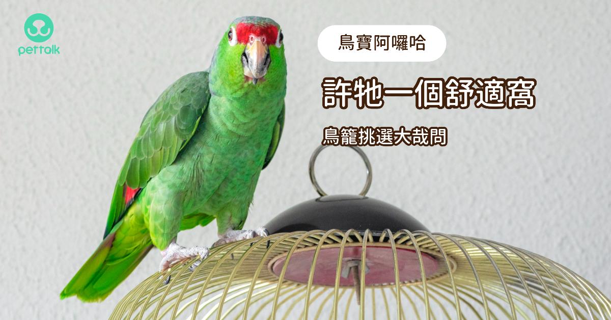 【鳥寶阿囉哈】許牠一個舒適窩,鳥籠挑選大哉問|專業獸醫—林依儒