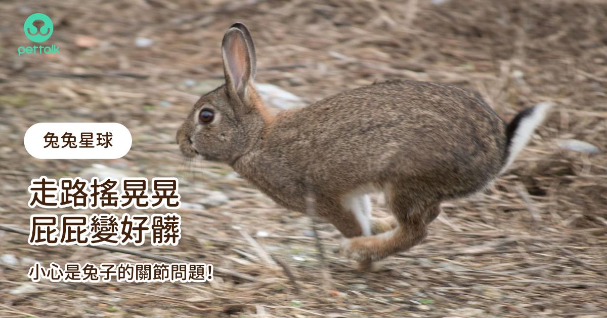 【兔兔星球】走路搖晃晃、屁屁變好髒,小心是兔子的關節問題!|專業獸醫—侯彣