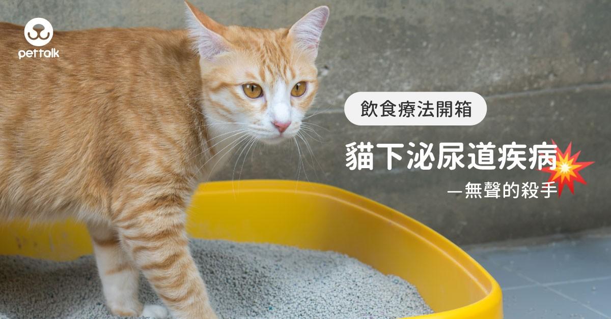 【飲食療法開箱】無聲的殺手—貓下泌尿道疾病|PetTalk愛寵健康談