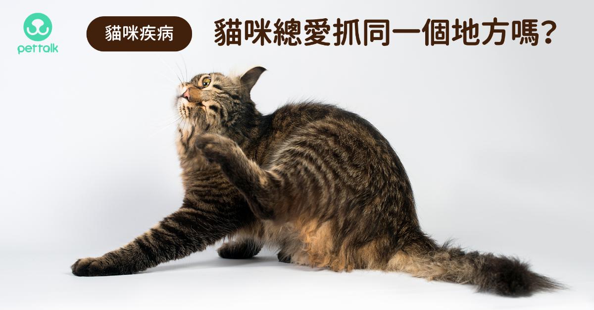 貓咪總愛抓同一個地方要注意!|專業獸醫—陳郁晴