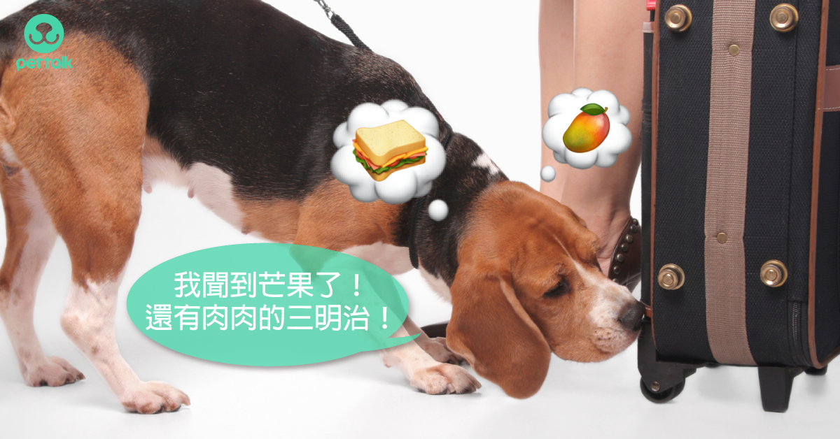 工作犬特輯:檢疫犬的工作經